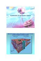Potenziale Di Membrana, Potenziale Dazione E Trasmissione Sinaptica